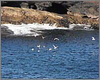 Birdwatching in Clare